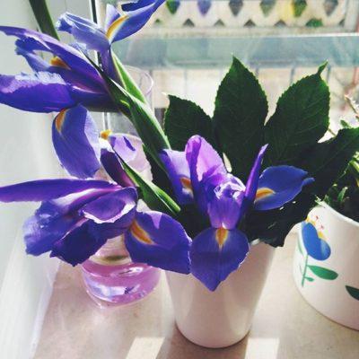 Flores Iris